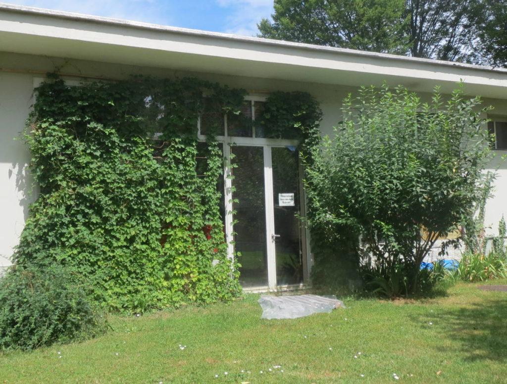 Le houblon derrière la Brasserie Glouglou · historique de l'association HoublonNous, à Mategnin, Meyrin, Genève