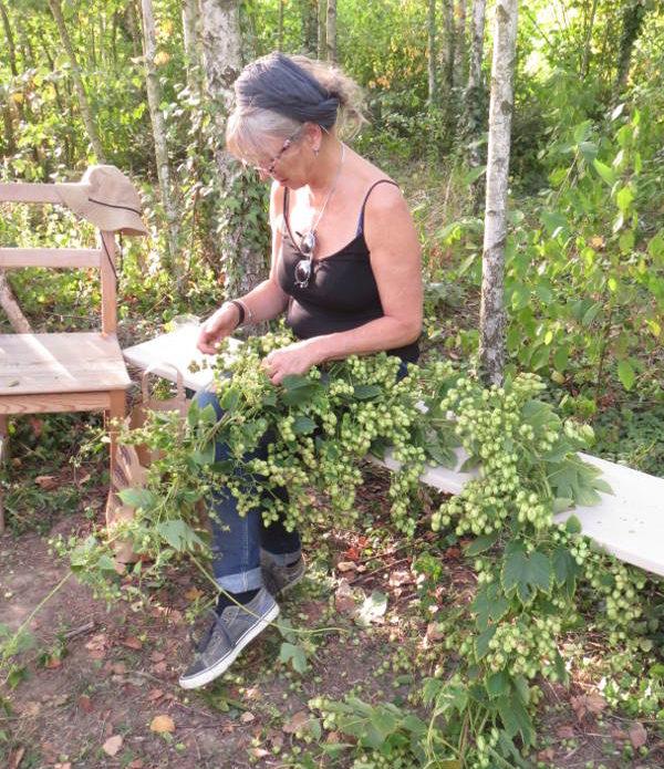 Récolte du houblon bénévoles 2019 – 5
