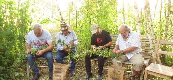 Récolte du houblon en 2019 · association HoublonNous, Mategnin, Meyrin, Genève